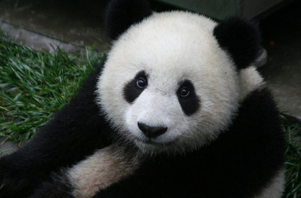 TOP tým upřednostňuje lidská práva před pandou